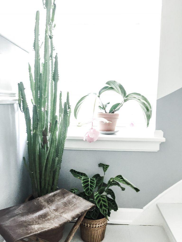 grønne planter kaktus