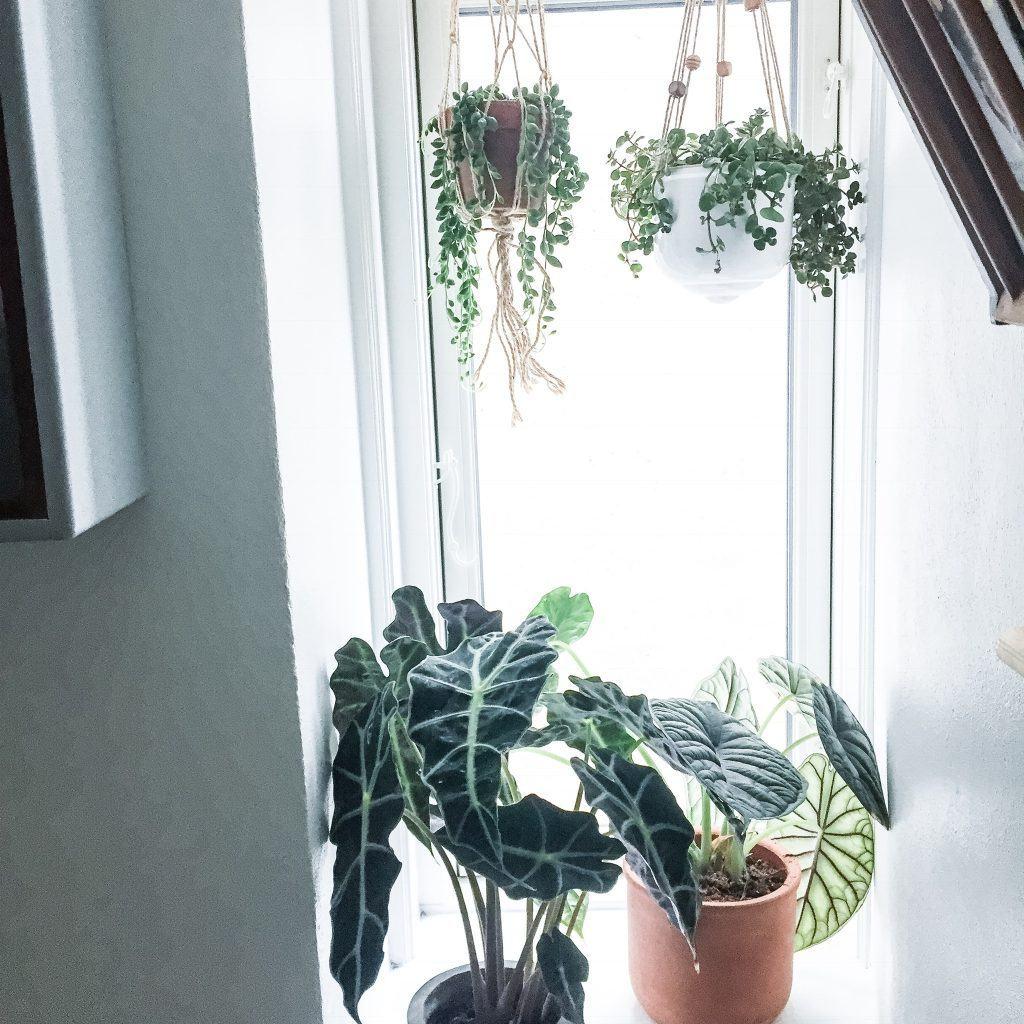 diy macrame grønne planter